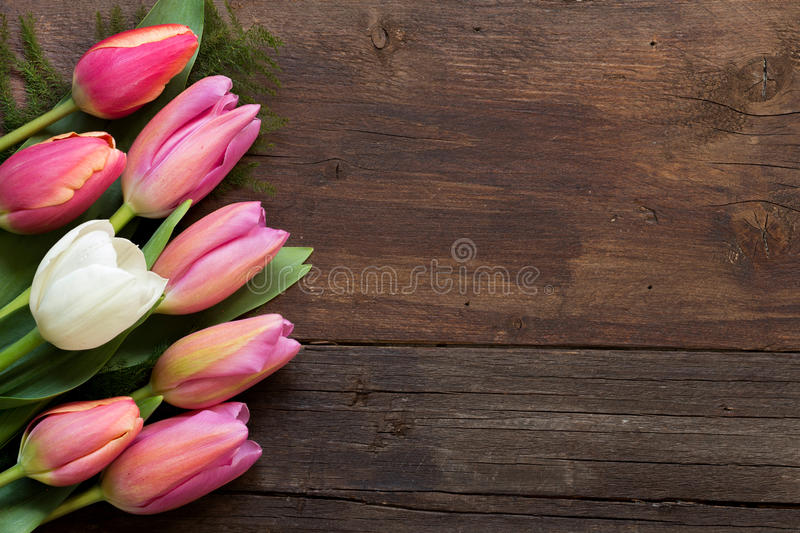 Pink tulips on dark wood background. Pink and white tulips on dark wood background royalty free stock images