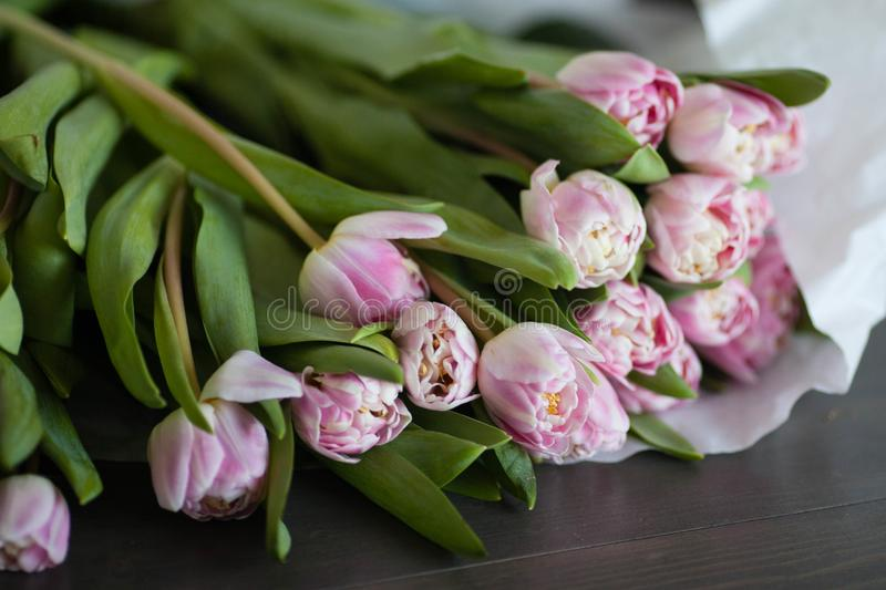 Pink tulips on a dark wooden background stock photo