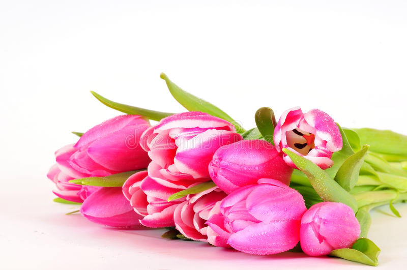 Download Pink Tulips flowers stock photo. Image of greetings, flower - 17568318