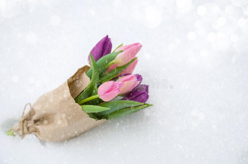 Bouquet of colorful pink tulips in a paper bag on the snow, snowfall, copy space stock images