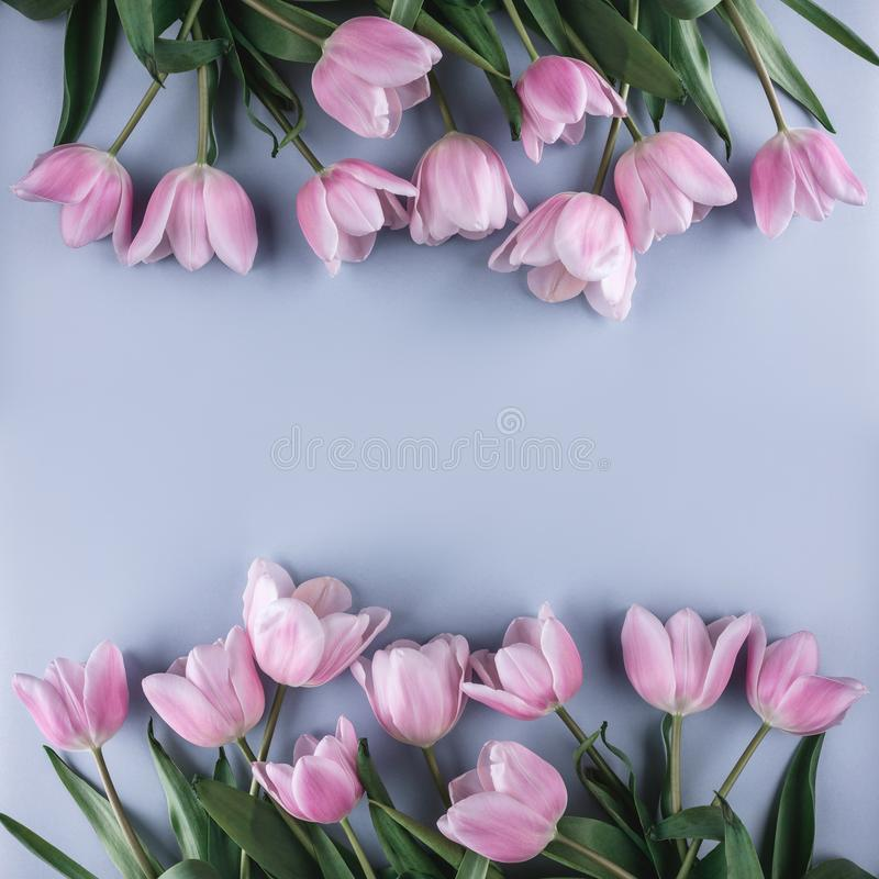 Free Pink Tulips Flowers On Blue Background. Waiting For Spring. Greeting Card Or Wedding Invitation Stock Images - 123987164