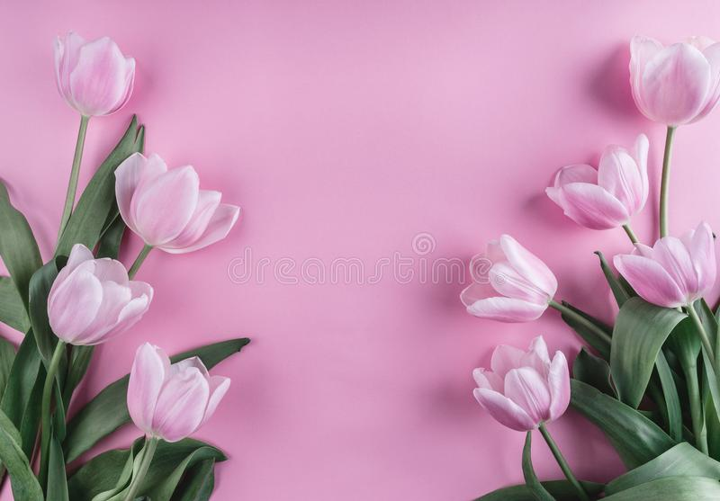 Pink tulips flowers over light pink background. Greeting card or wedding invitation. Flat lay, top view stock images