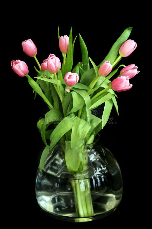Pink tulips in a vase with a black background with natural light. stock image