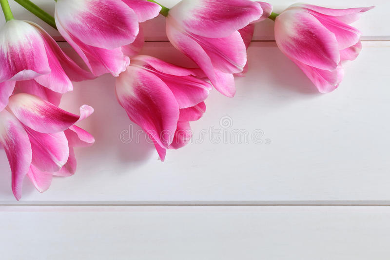 Pink Tulips on a white wooden planks royalty free stock photos