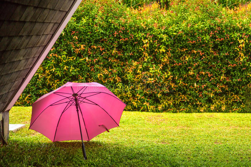 Pink umbrella. In the backyard after raining stock photo