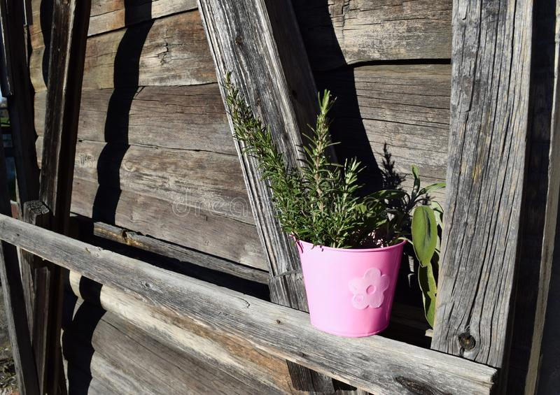 Pink vase with rosemary and sage royalty free stock photos