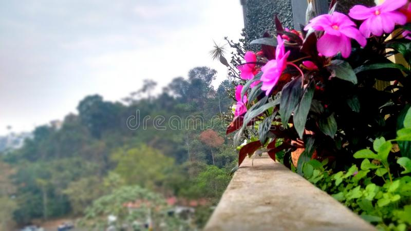 Pink view. Yesterday's pink view on Los Teques, Venezuela royalty free stock images