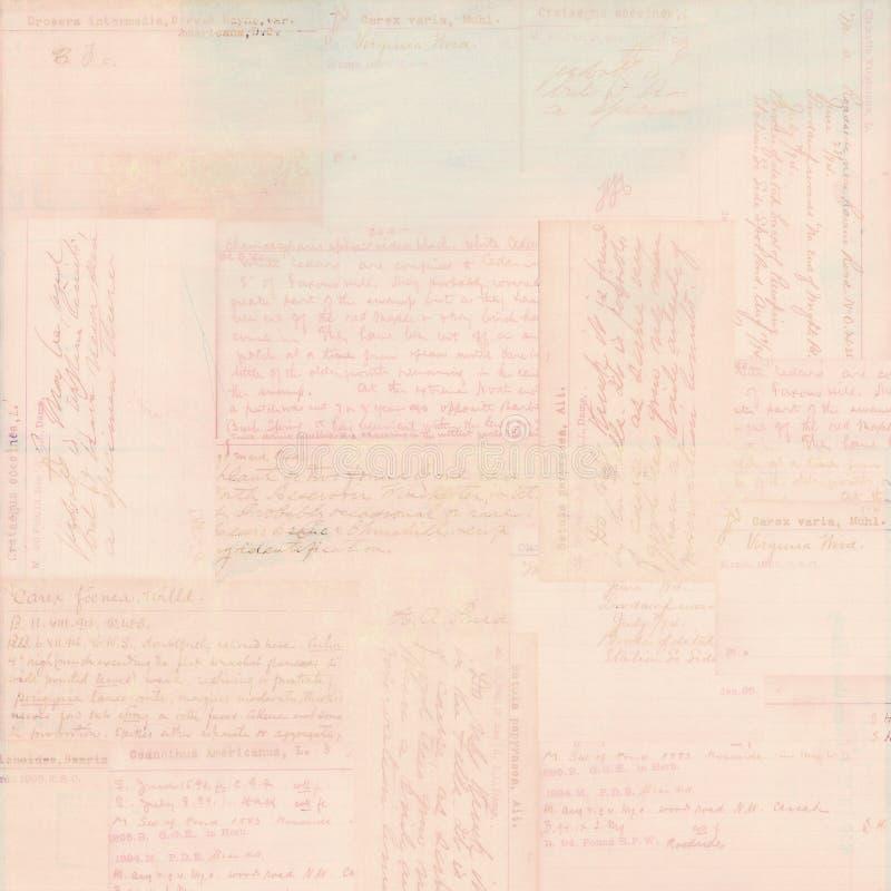 Pink vintage postcard text ephemera background royalty free stock image