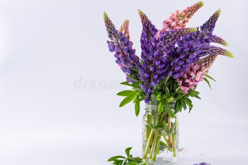 Pink and violet lupins in glass vase stock photos