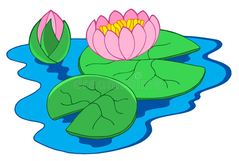Download Pink water lilies stock vector. Illustration of illustration - 6026662
