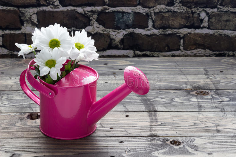 Pink watering can with white daisies on wooden table stock photo