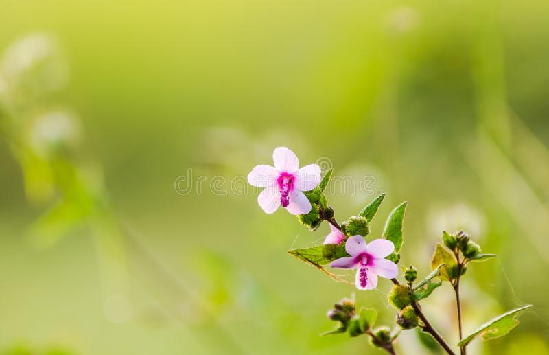 Pink weed flowers stock image image of blur blossom 108629323 download pink weed flowers stock image image of blur blossom 108629323 mightylinksfo