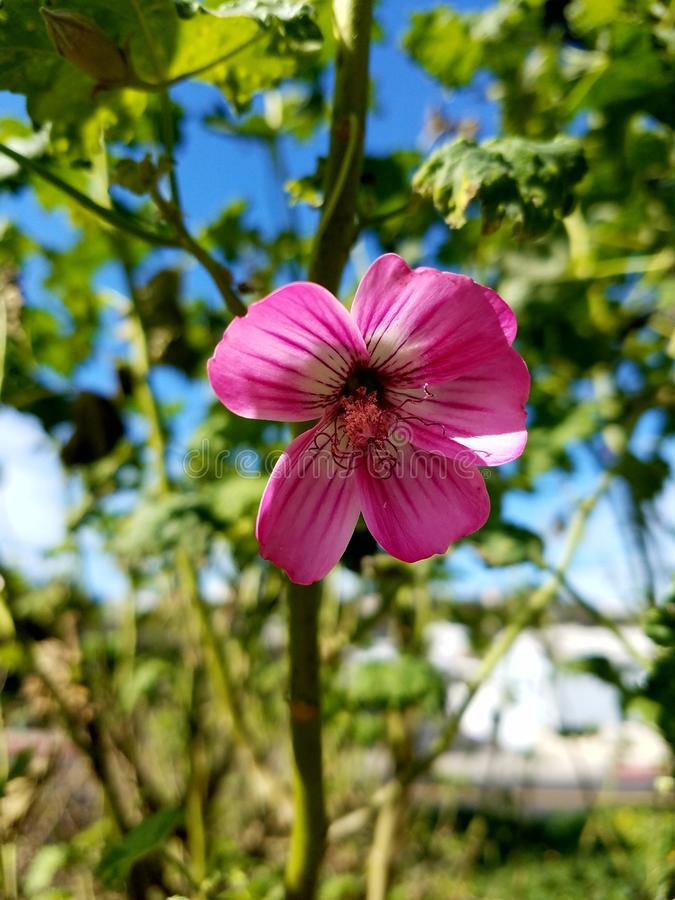 Pink and white flower up close with green background. Up close look at the center of a pink and white flower 4k stock image