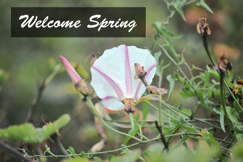 Pink and White Flower Welcome Spring stock images