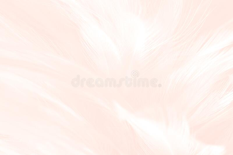 Pink white gold feather pattern texture background. Luxury, beautiful abstract pink pastel soft-light blur. Macro, detail texture. Of pattern design, elegance stock photos