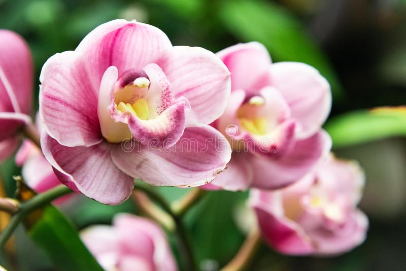 Orchids in the garden royalty free stock photos