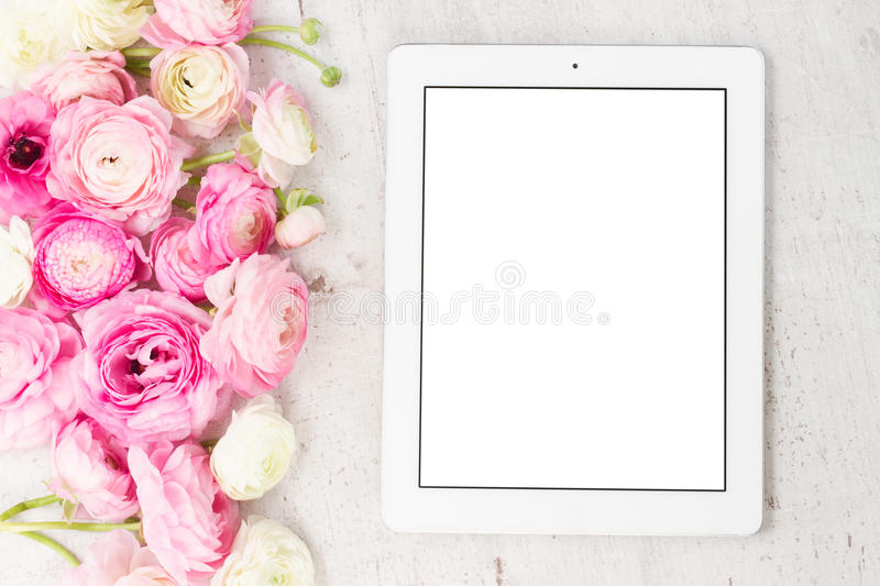 Pink and white ranunculus flowers royalty free stock images