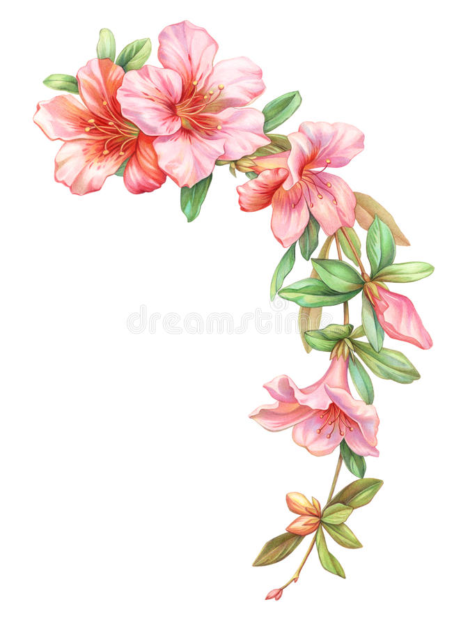 Pink white rose vintage azalea flowers garland wreath isolated on white background. Colored pencil watercolor illustration. stock illustration