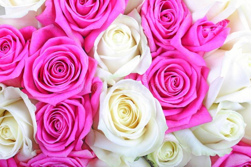 Pink white roses rose background flower flowers bouquet wedding love romance day color bunch valentines petal nature beautiful. Pink and white roses background royalty free stock image