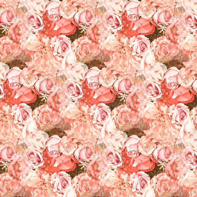 Pink & White Roses For Love. For A Valentines card or the one you love stock photo