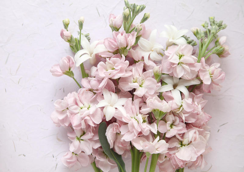 Pink stock and white hyacinth flowers stock photo image of white download pink stock and white hyacinth flowers stock photo image of white nature mightylinksfo Gallery