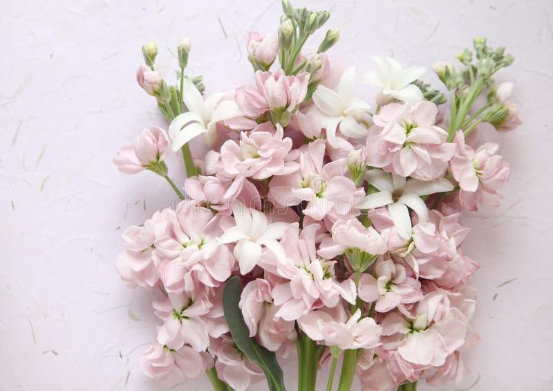 Pink stock and white hyacinth flowers stock photo image of white download pink stock and white hyacinth flowers stock photo image of white nature mightylinksfo