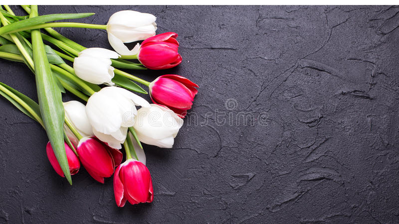 Pink and white tulips flowers on black textured background. royalty free stock images
