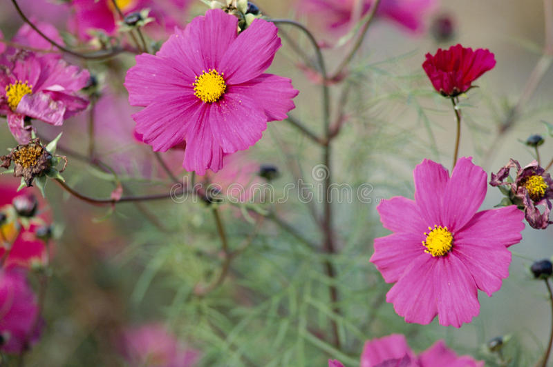 Pink wild flower. Background and bokeh stock images