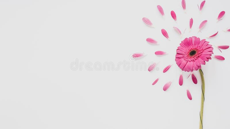Pink wildflowers meadow on white background. Turkey royalty free stock images