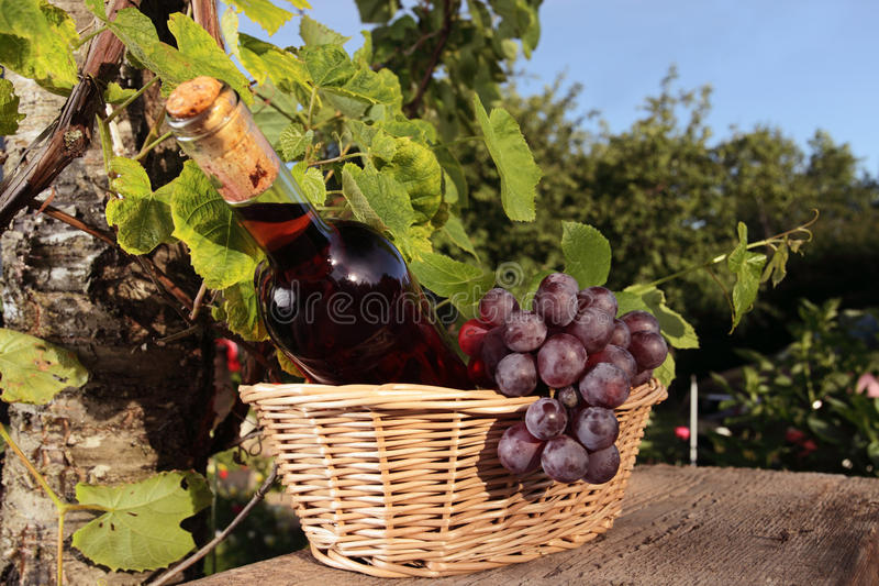 Pink wine and grape stock photos