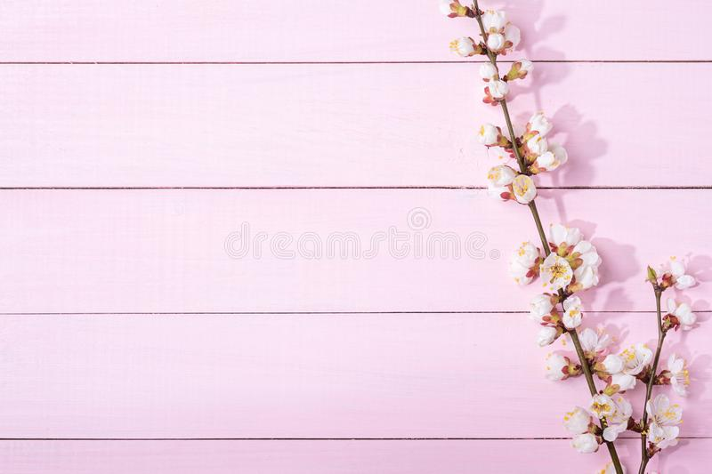 Pink wooden background with branches of blossoming apricot and copy space for text royalty free stock photo