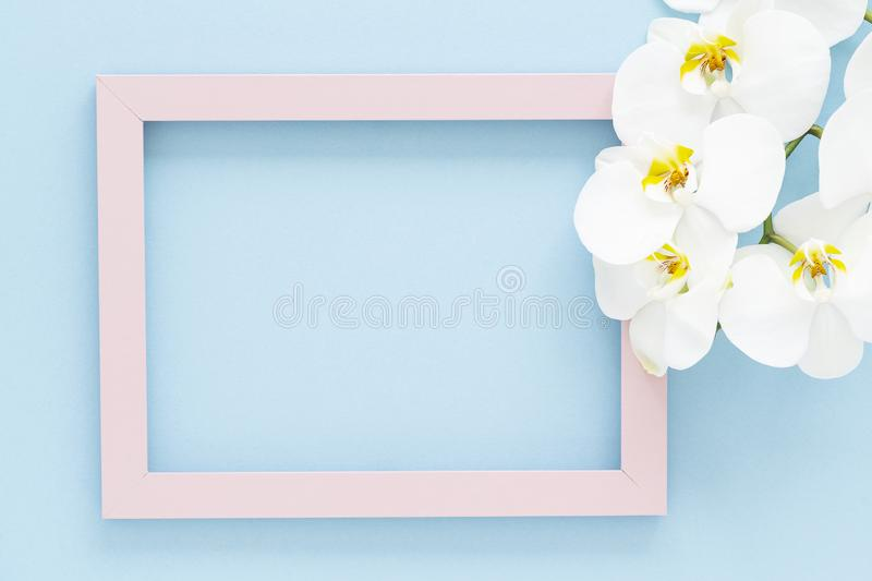 Pink wooden photo frame with beautiful white Orchid flower on blue background. Flat lay composition. royalty free stock photos
