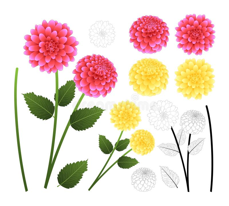 Pink and Yellow Dahlia with Outline isolated on White Background. Mexico`s national flower. Vector Illustration royalty free illustration