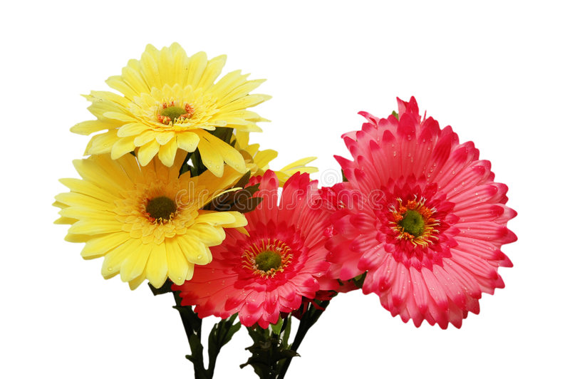 Download Pink and yellow flowers stock image. Image of beauty, multi - 2161925