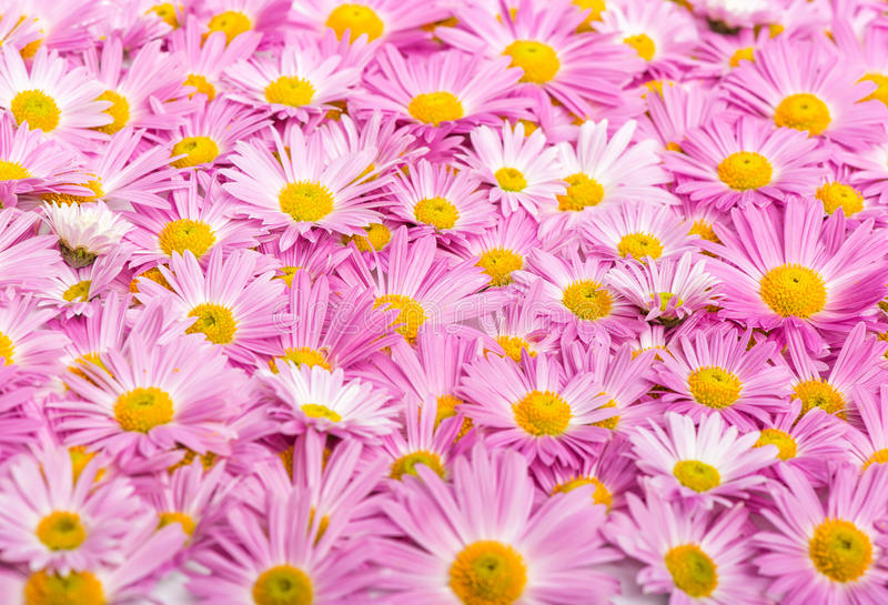 Pink and yellow flowers background stock image image of color pink and yellow flowers background mightylinksfo