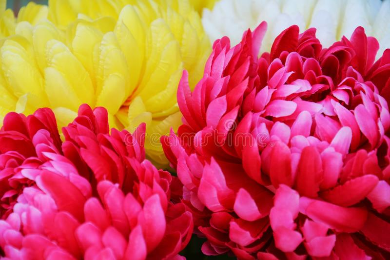 Pink yellow flowers, colorful flowers and leaves, natural background stock images