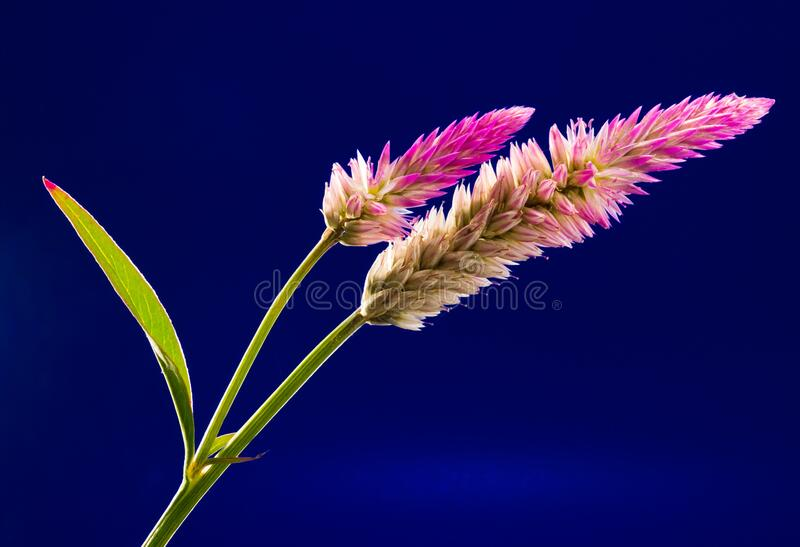 Pink Yellow and Green Flower stock photos