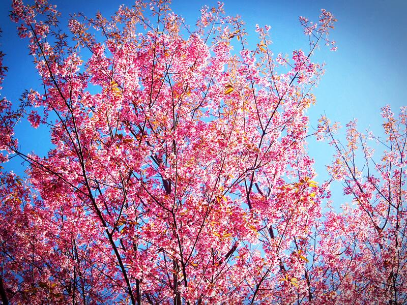 Pink and Yellow Leafed Tree Under Blue Sky during Daytime stock photo