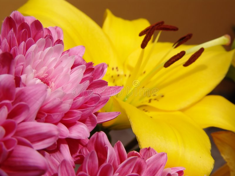 Pink - Yellow Lily royalty free stock images