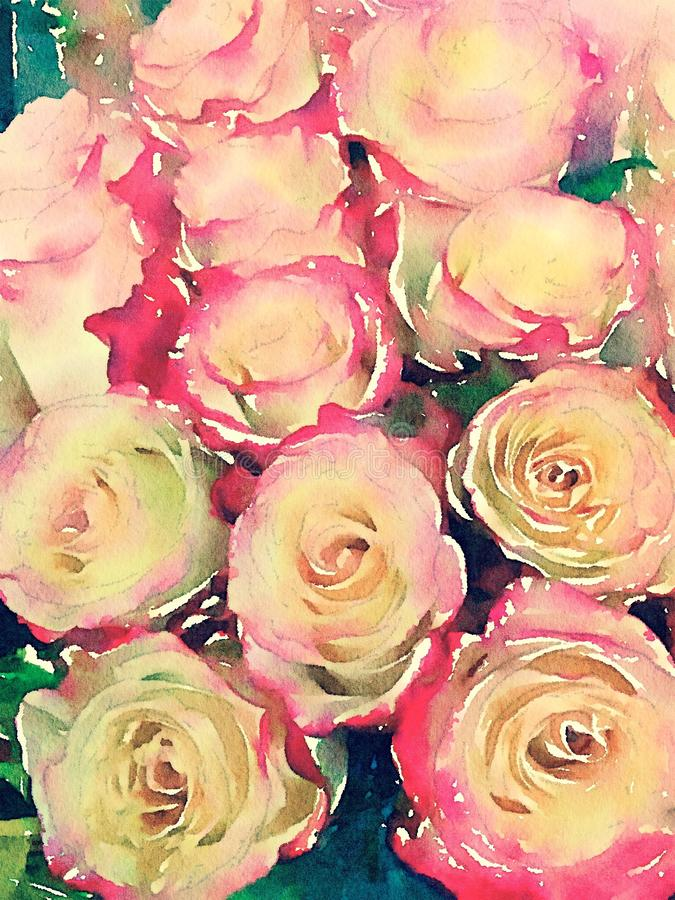 Pink and yellow roses watercolor illustration vector illustration