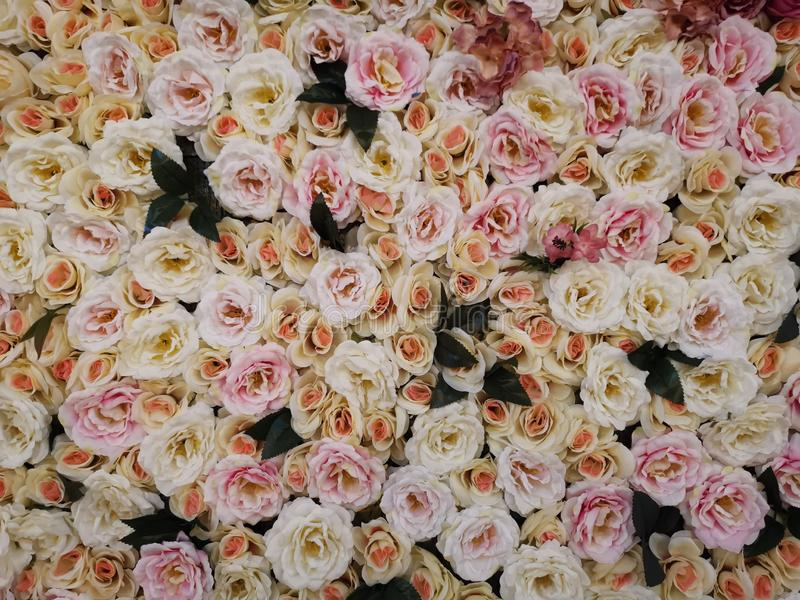 Pink and yellow vintage roses stock image