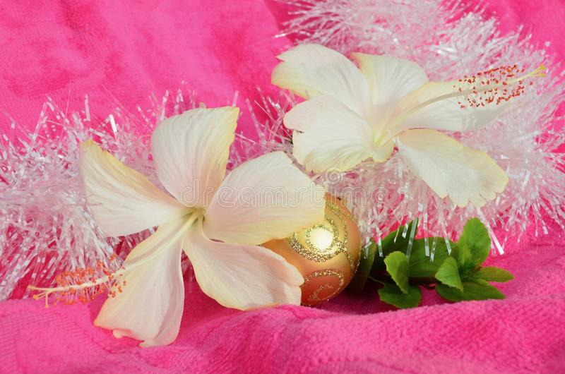 Pink yellow white gold Christmas background golden white hibiscus flowers and white tinsel green leaves soft background stock images