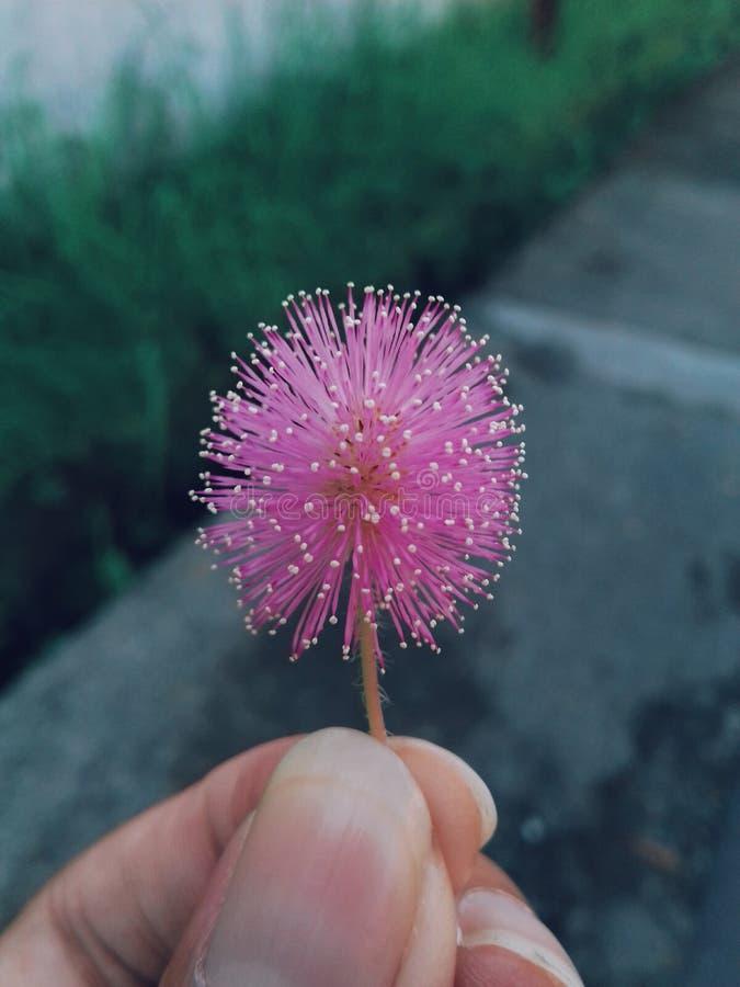 Pinkbloem stock foto