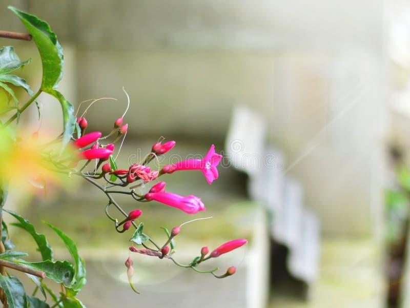 Pinkbloemen royalty-vrije stock foto's