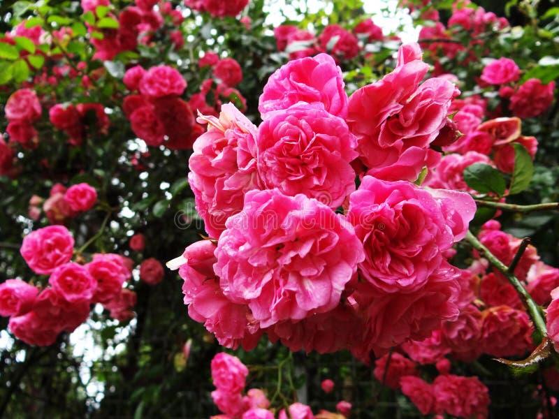 Pinked Up Nature stock photos