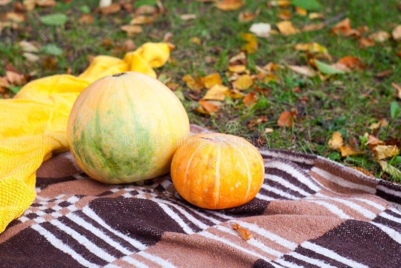 Pinkin w jesień parku, dwa pomarańczowej bani kłama na szkockiej kracie obraz royalty free