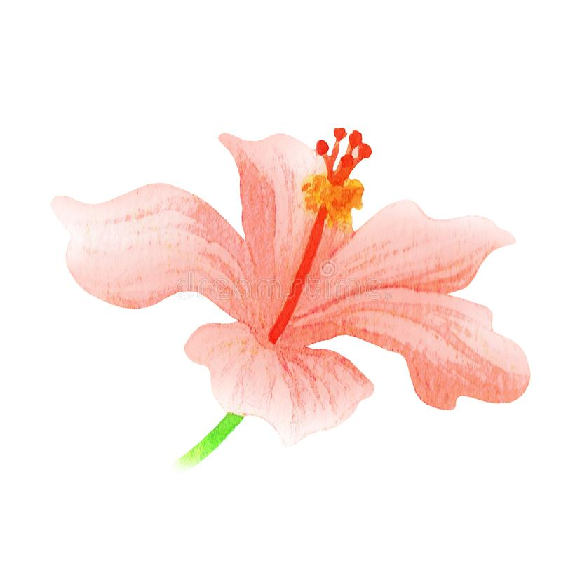 Pinky Hibiscus Tropical Watercolor Illustration libre illustration