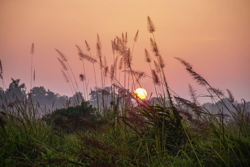 Pinky Orange Sky bij Zonsopgang in de Ochtend in het Nationale Park van Chitwan in Nepal royalty-vrije stock foto
