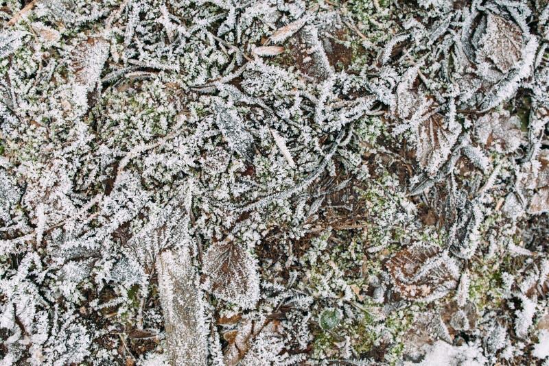 Pinnar, gräs och sidor som täckas med frost arkivfoton