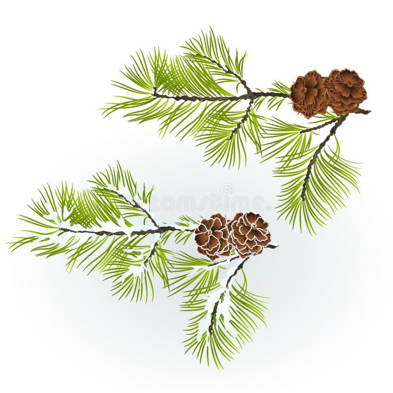 Pino de la rama de la conífera con los conos del pino otoñales stock de ilustración